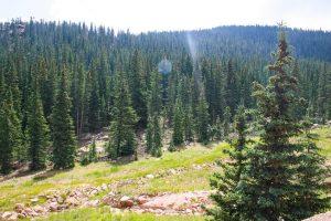 tree removal fire mitigation process parker